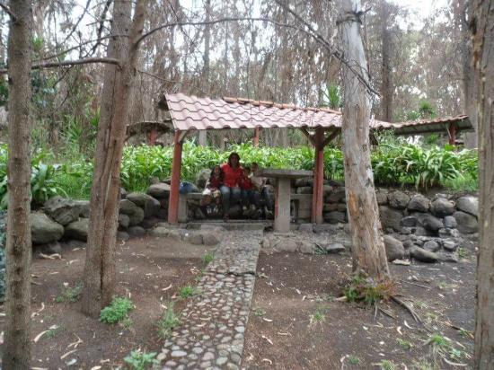 Parque De Los Ciervos