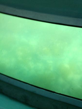 Oga Glass Bottom Boat : 船底