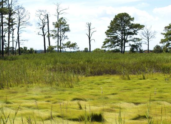 Grasonville, Мэриленд: Summer wetlands