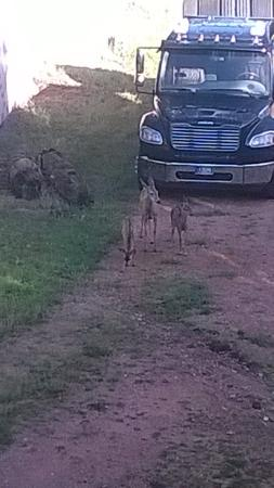 Days Inn Manitou Springs: Mama doe & babies
