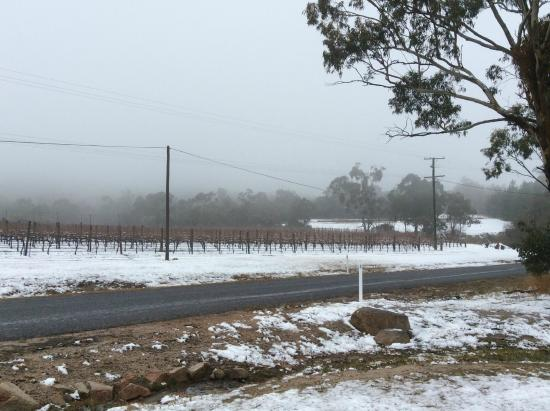 Stanthorpe Day Tours: A little snow on the vines