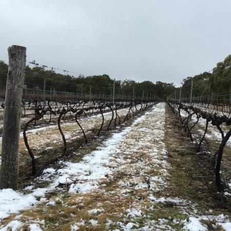 Stanthorpe Day Tours: Snow on The Granite Belt