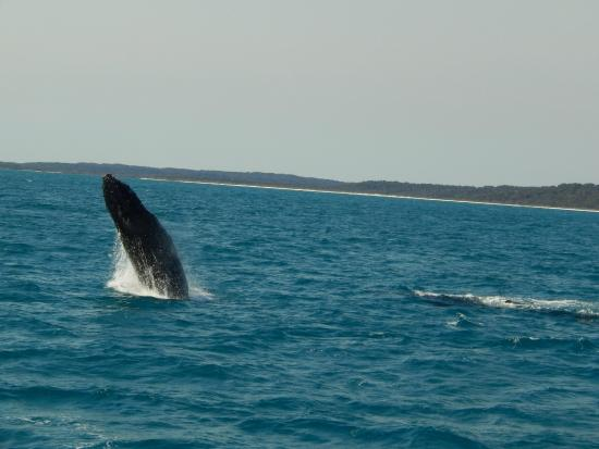 Fraser Lodge Holiday Park: whalewatching