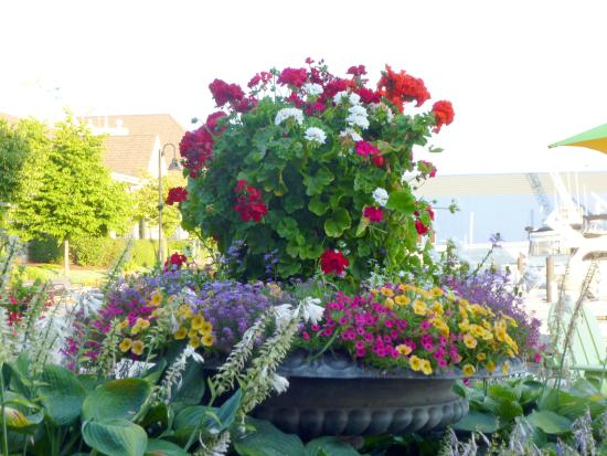 Stone Harbor Restaurant: Flowers on the Patio of the Restaurant