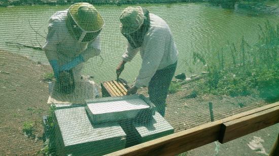 Triaize, Frankrike: ouverture de la ruche