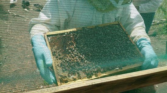 Triaize, Frankrike: cadre et les abeilles