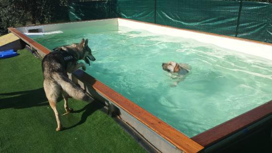 Piscina per cani picture of residence guardamare san vincenzo tripadvisor - Piscina per cani ...