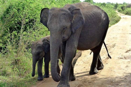 Unawatuna, Sri Lanka: Mother and baby Udawalawa