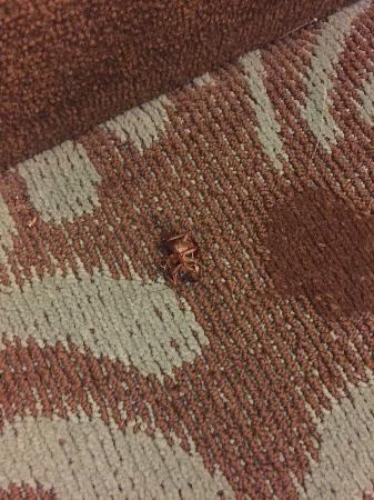 Doubletree by Hilton Augusta : Infested