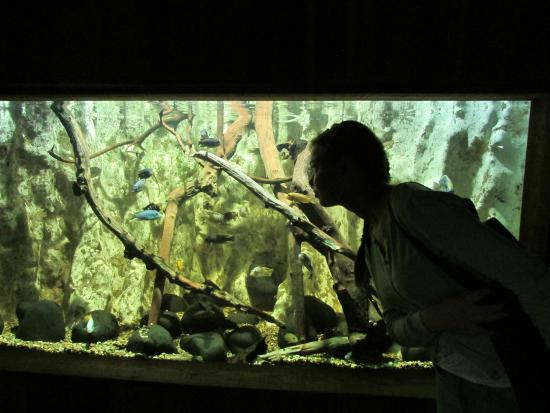 photo1.jpg - Foto di St Andrews Aquarium, St Andrews - TripAdvisor
