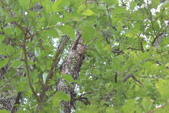 Yukawa Furusato Park: 公園の樹に居たカブト虫