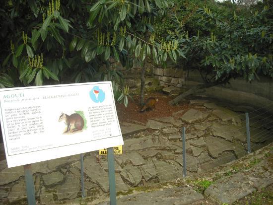 Agut en el zoo picture of jardin des plantes paris - Zoo jardin des plantes ...
