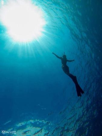 Free diving courses available - Discover Freediving, SSI Level 1 and