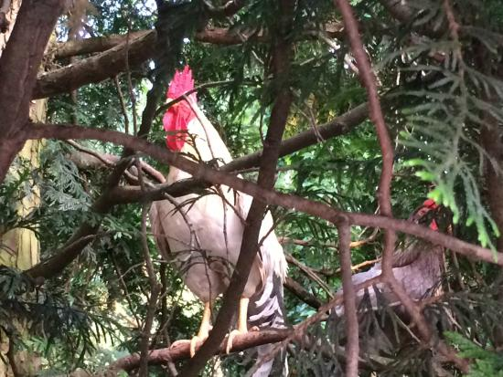 Gebrueder Meurer: Abends im Baum....