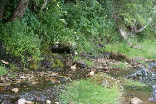 Vishma, Russland: Река Понерётка. Лето июль 2015