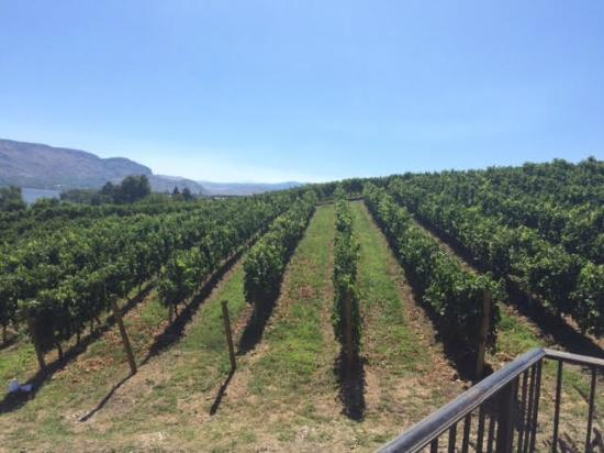 La Stella Winery : Beautiful view from the terrace