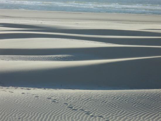 Florence, OR: sahara-like dunes