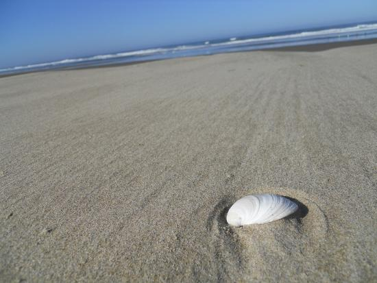 Florence, OR: beautiful white sand and shells