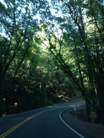 Cobb, CA: Tree lined roads