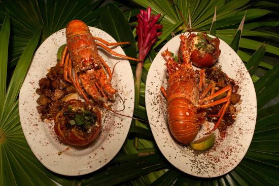 Cayos Cochinos, Ονδούρα: Lobster