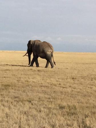 Diamonds Dream of Africa: Safari avec hassan
