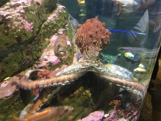 Puffin Picture Of Seattle Aquarium Seattle Tripadvisor