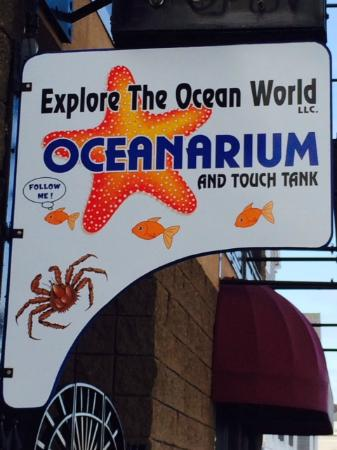 Explore the Ocean World Oceanarium
