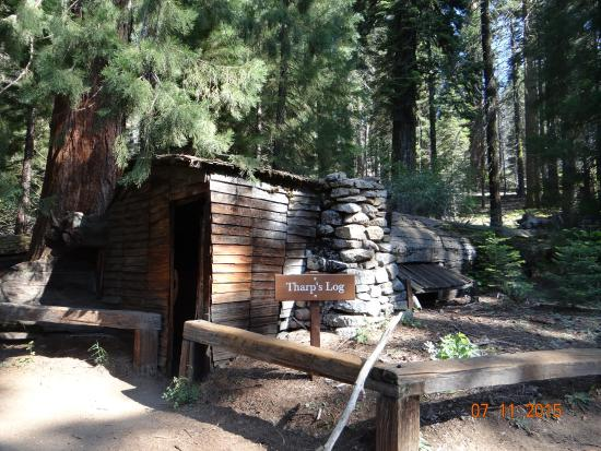 park lodge trees national amid tallest in wuksach california wuksachi sequoia cabins hotel earths top