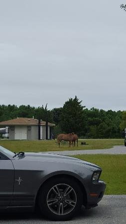 Assateague Island National Seashore Campground