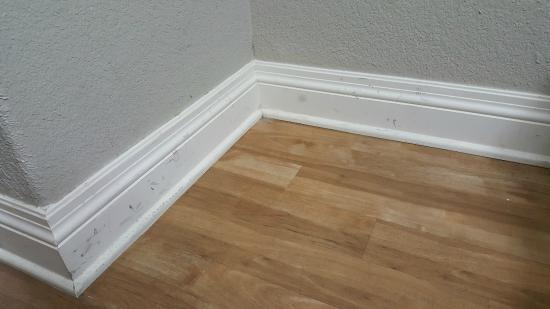 Super 8 San Antonio Near Fort Sam Houston : Scuffs and stains covered every wall and every piece of moulding.