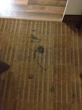 Extended Stay America - Denver - Tech Center - North: stains on carpet, more than these, just selected these to show