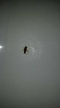 Quality Inn of Troy: Found this bug looks like a cockroach in bathroom.