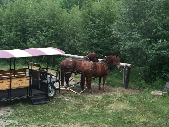 Last Chance Ranch Helena 2019 All You Need To Know