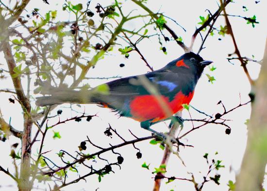 Aves Internacionales Colombia