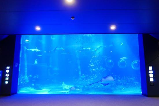 のとじま水族館 - Photo de Notojima Aquarium, Nanao - TripAdvisor