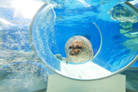 のとじま水族館 - Picture of Notojima Aquarium, Nanao - TripAdvisor