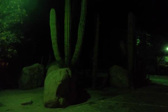 Desert Inn Catavina : Jardin