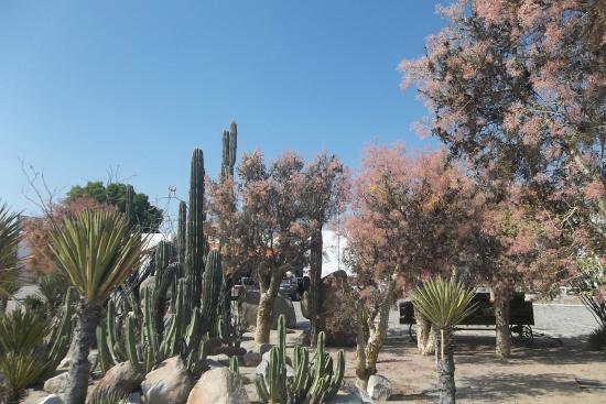 Catavina, Μεξικό: Jardin