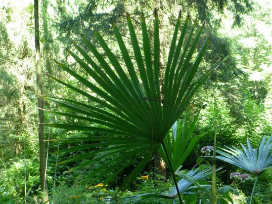 Jardin Jungle Karlostachys : Jardin jungle
