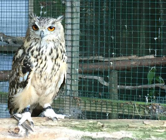 Long Acre Bed & Breakfast : The owls were delightful!