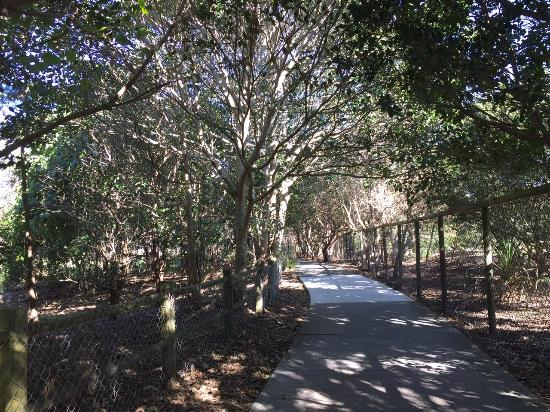 Casuarina, Australien: Walking track from the retreat to the beach