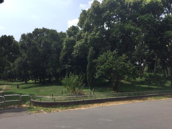 Yumenoshima Park : photo0.jpg