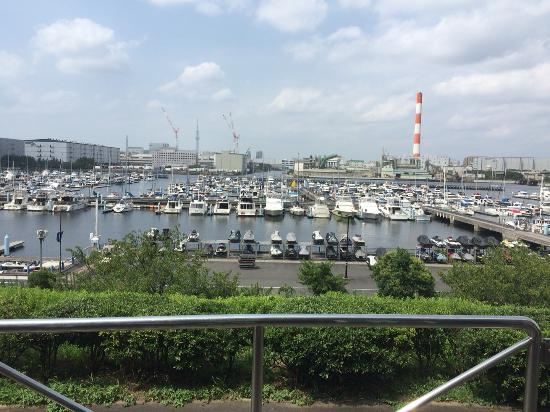 Yumenoshima Park : 森も有る、ひまわり畑もある