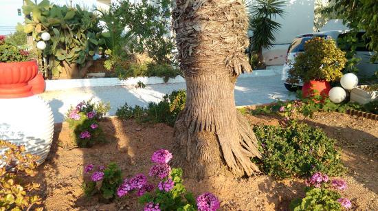 Alkion Hotel: Ogród