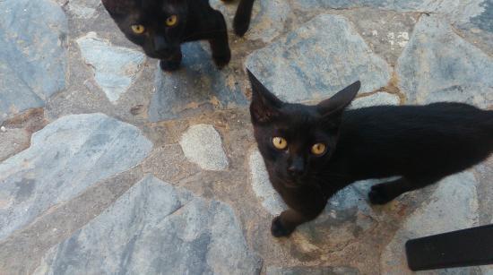 Alkion Hotel: Hotelowe kotki