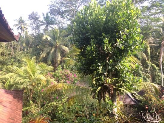 Gustis Garden Bungalows: La vue de notre terrasse, magnifique