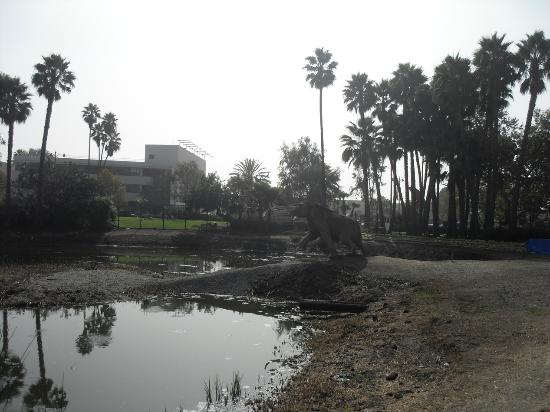 La Brea Tar Pits and Museum: The amazing Tar Pits
