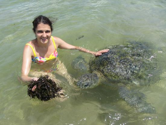 Koggala Beach Hotel: Черепахи в бухте Хиккадува