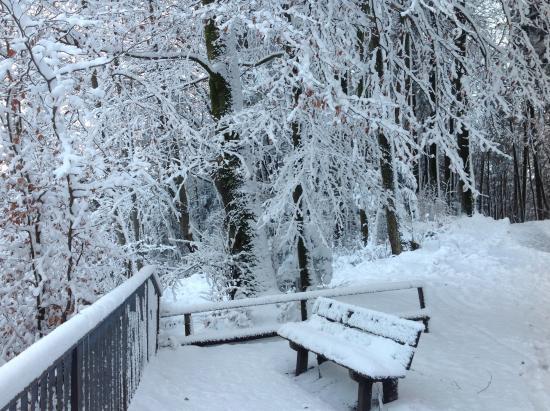 Felsenegg: Beautiful snowfall
