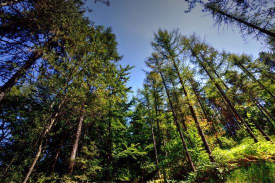 Giardino Pietra Corva : Photo0.jpg foto di giardino botanico alpino di pietra corva